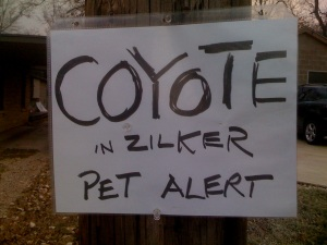 """Coyote in the neighborhood"" sign on telephone pole"