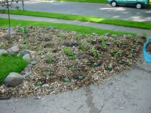 Bed planted with plants