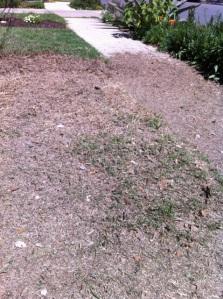 Scalp the grass