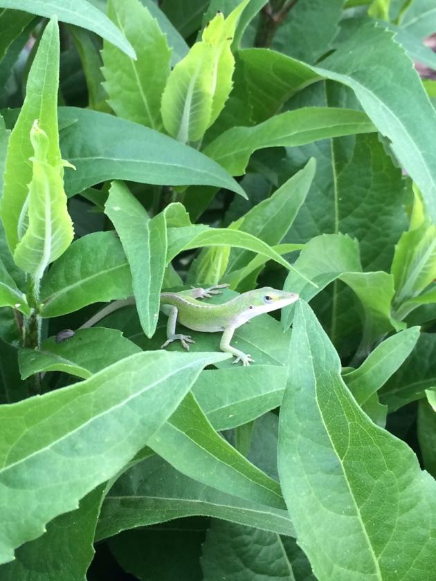 Lizard on a plant
